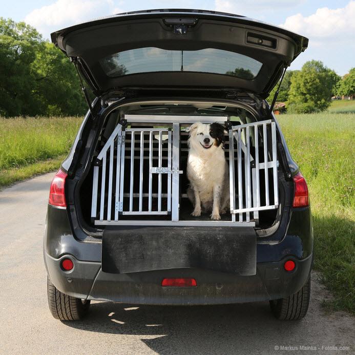 hunde an bord so werden hunde sicher im auto transportiert. Black Bedroom Furniture Sets. Home Design Ideas